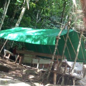 ostrov Flores káva