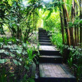Bali zahrada